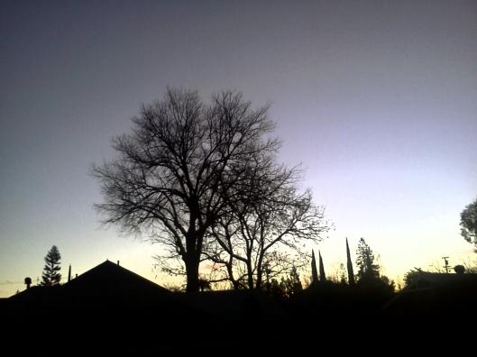Elm Tree Sunrise