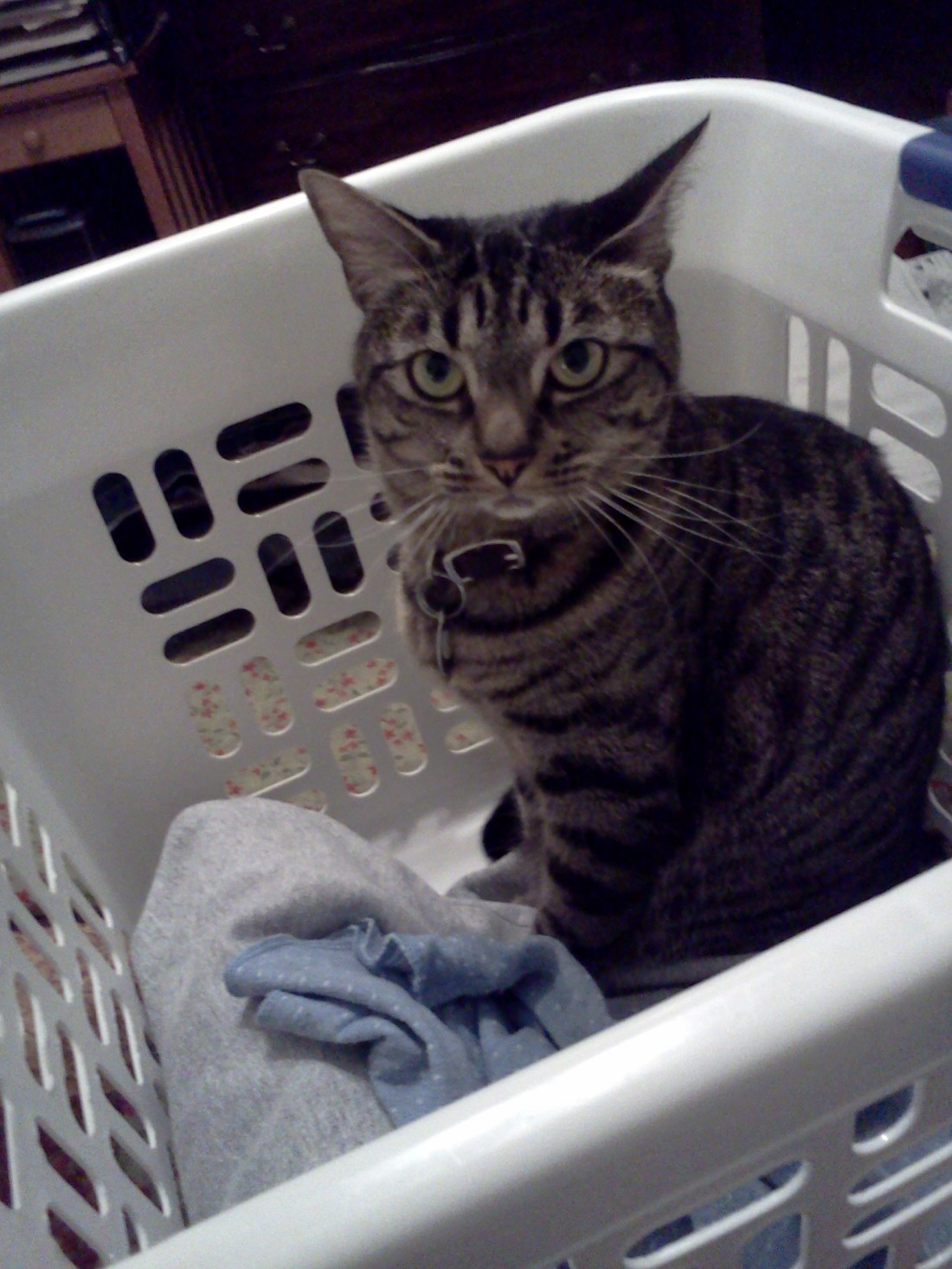 Tiger Lily in a basket