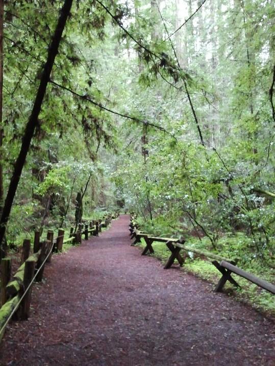 Armstrong Redwood Reserve - CSP