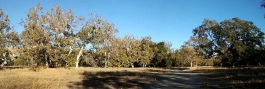 Sycamore Grove 6