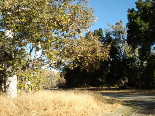 Sycamore Grove 3