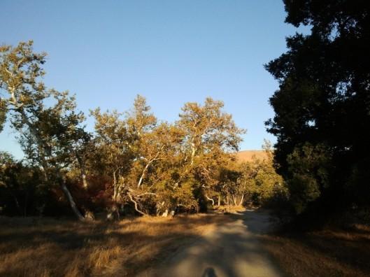 Sycamore Grove 4