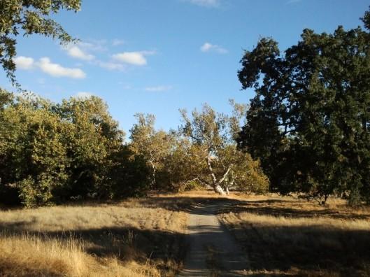 Sycamore Grove Nature Study Area