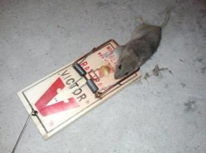 Psycho Rat