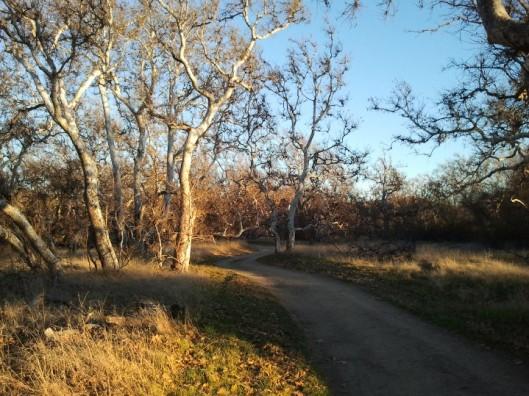Nature Area Road