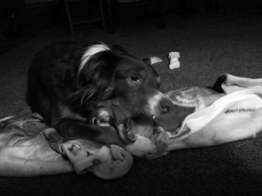 Maggie & her bone
