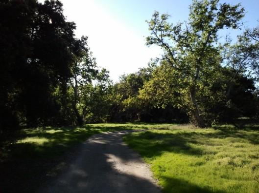 Sycamore Grove 1