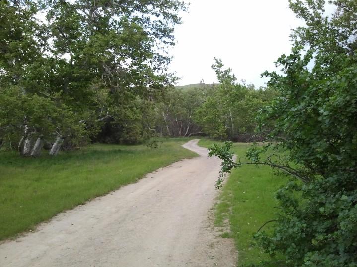 LARPD SGP Nature Area 3