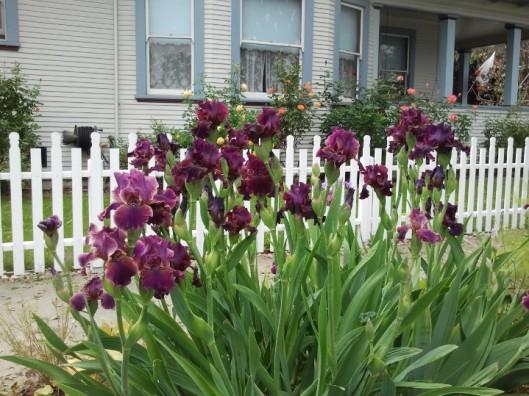 Amazing Blooms