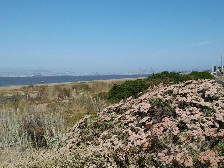 Crown Beach 1 June 2014